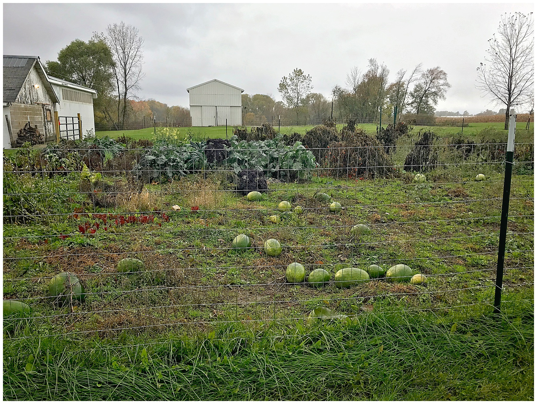 Creating a homestead garden