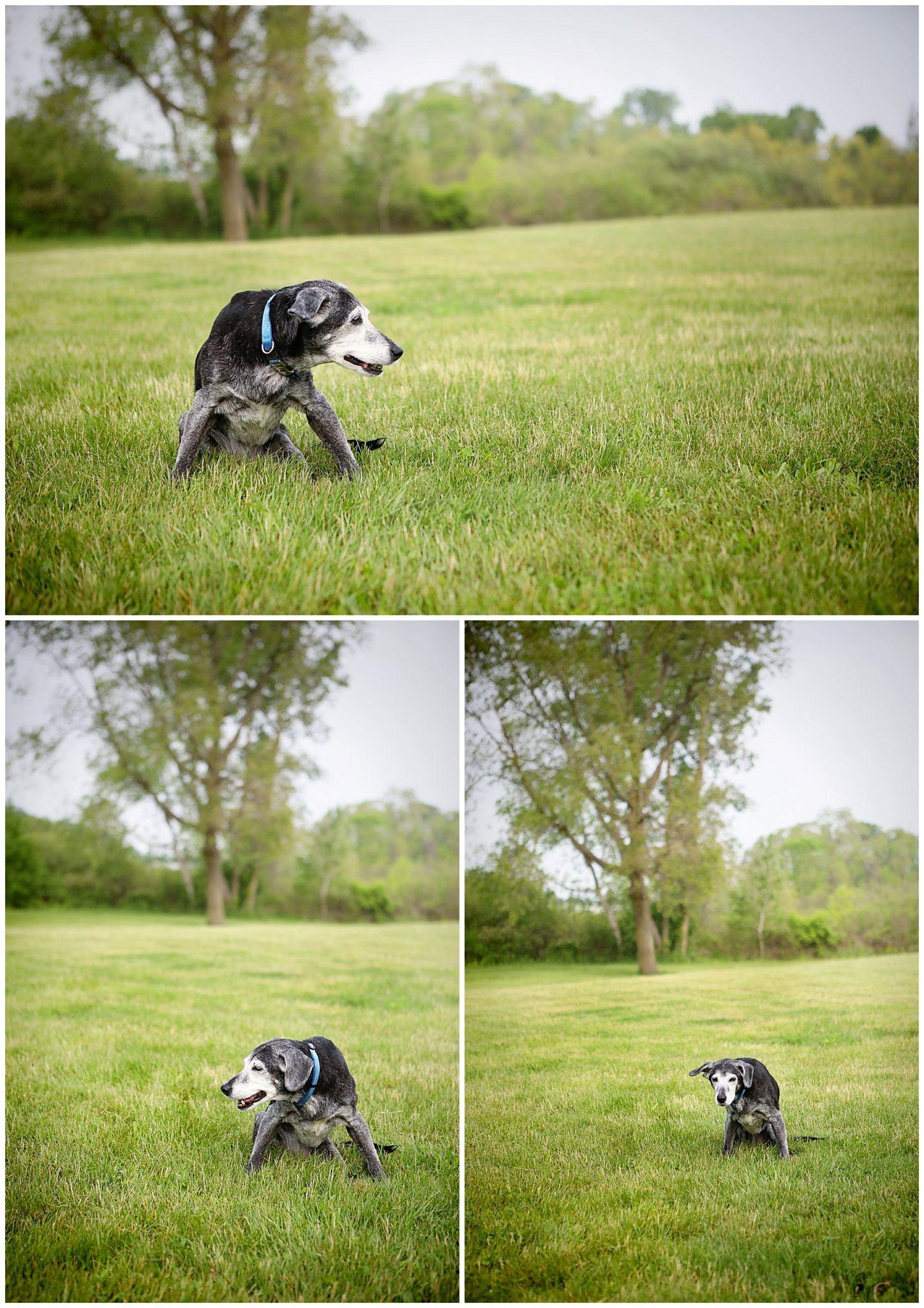 Losing my dog