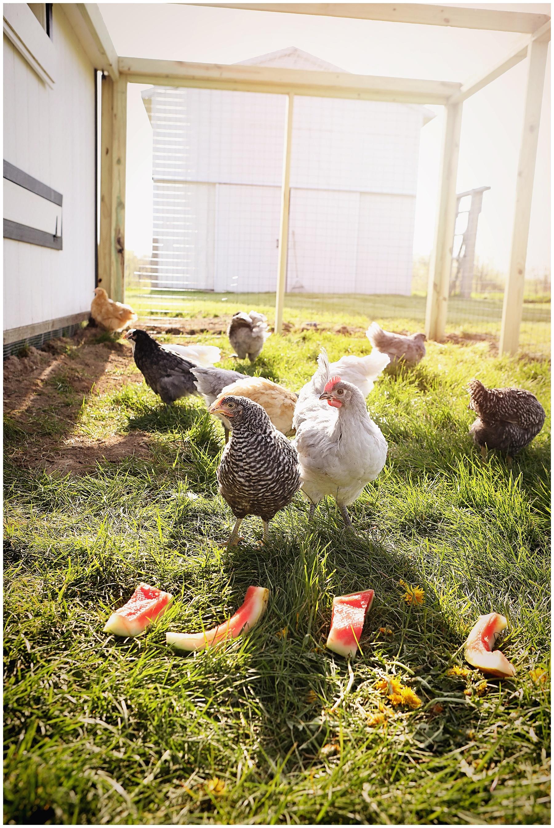 Chicken coop with run tour