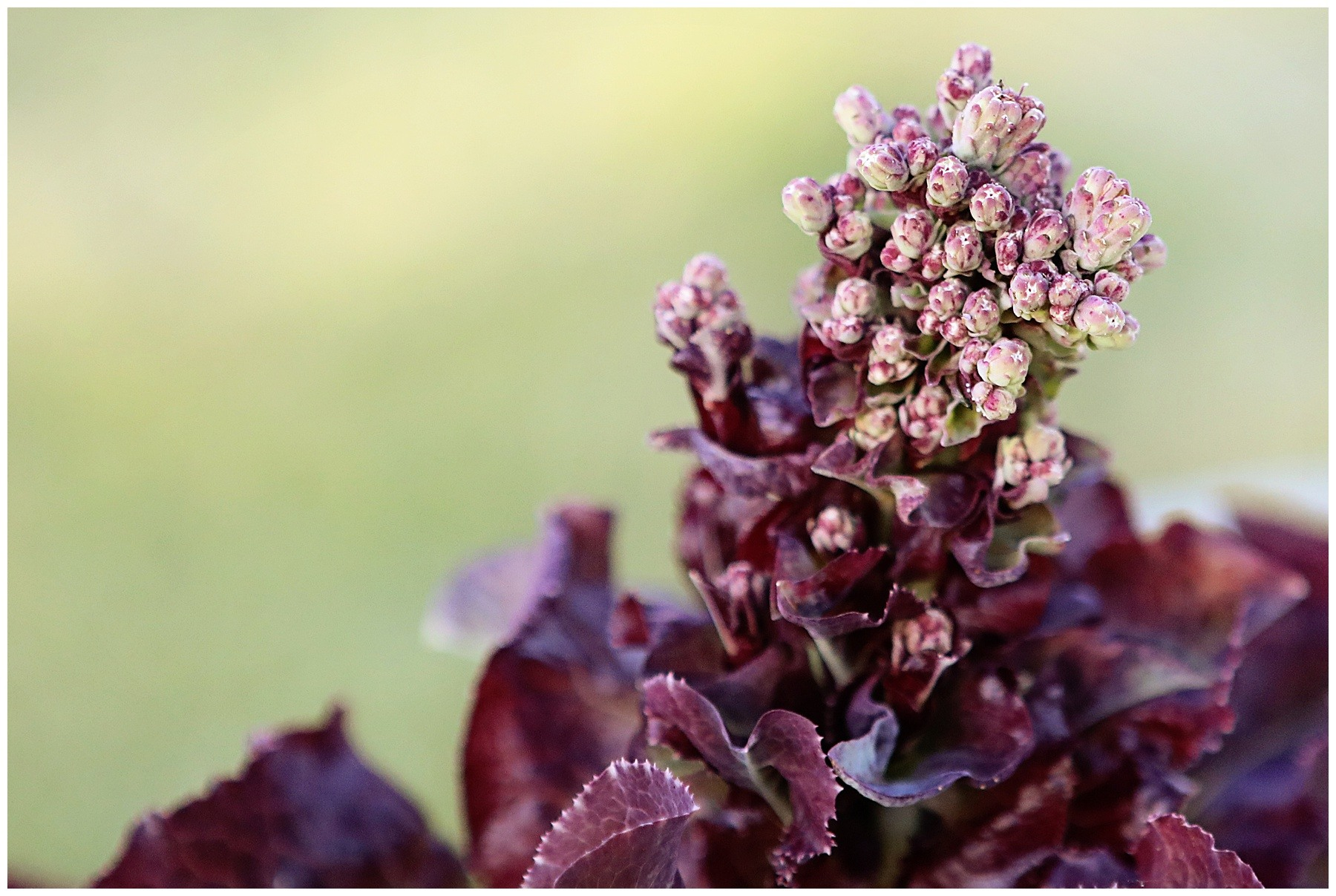 What does bolting mean in gardening?
