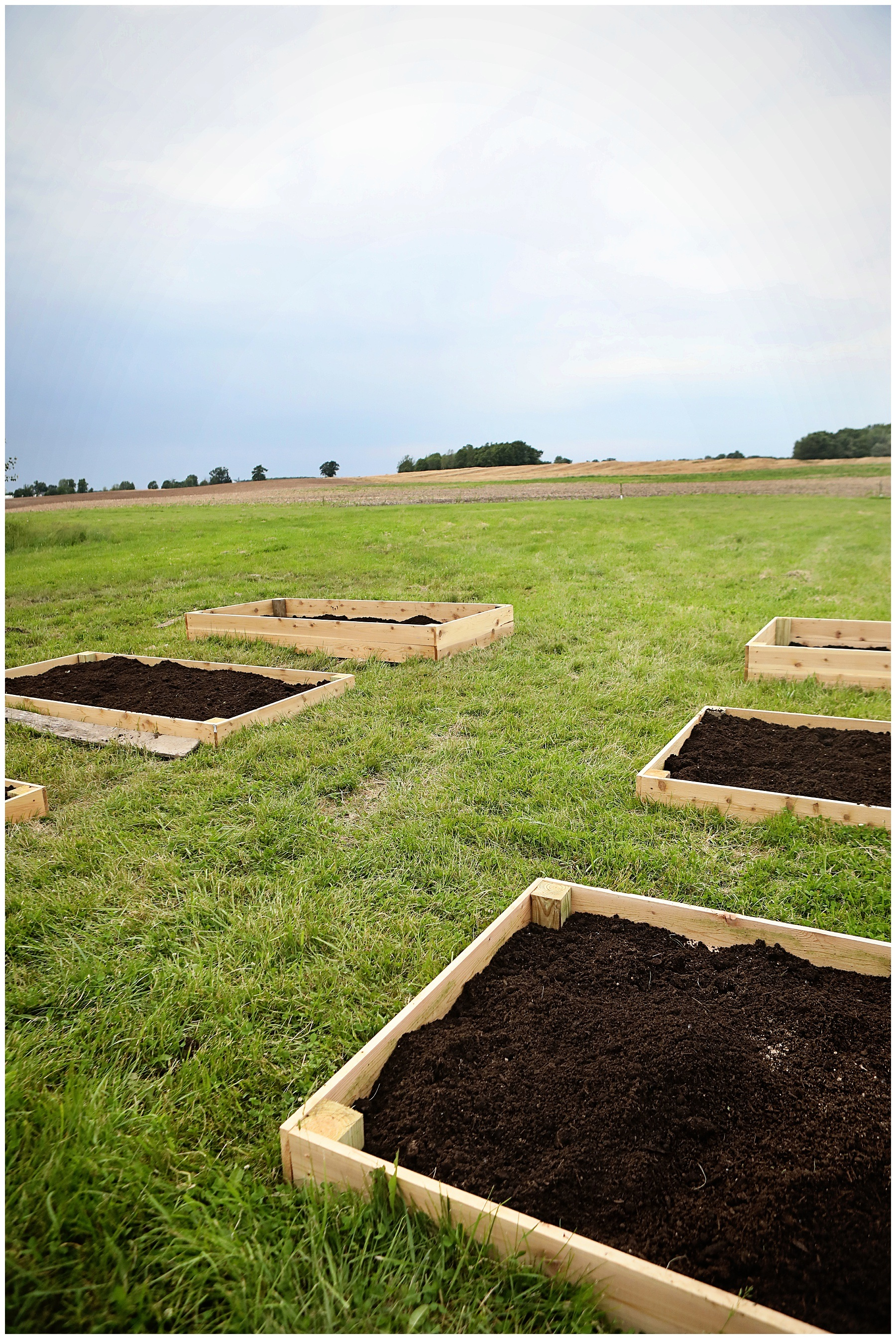 How to kill grass and weeds naturally in garden beds